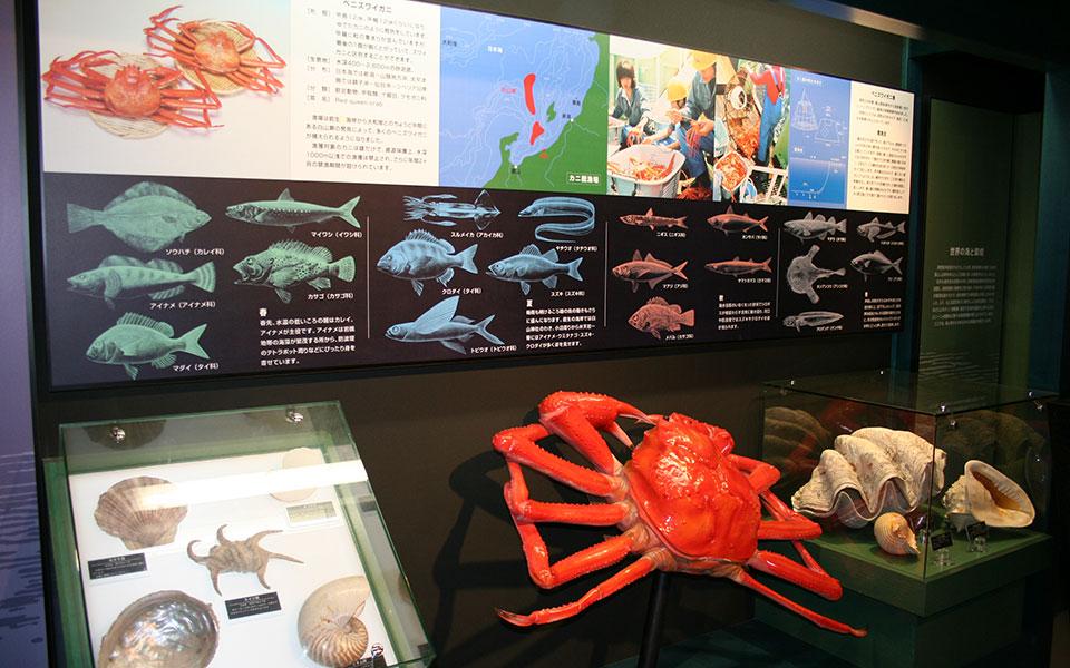 マリンミュージアム海洋