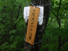 「金時坂」のスズメバチ注意看板