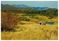 黒岩平の草原帯から犬ヶ岳へ