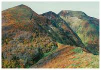 非対象細稜を経て犬ヶ岳へ