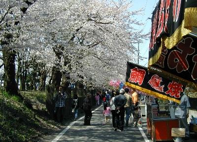 参道に並ぶ桜と露店も祭りの楽しみです