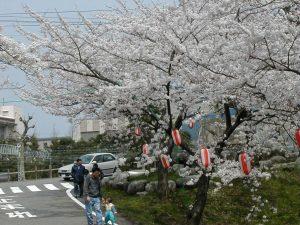 おうみ観桜会