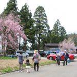 日本の原風景「徳合」枝垂れ桜の咲く里イベント